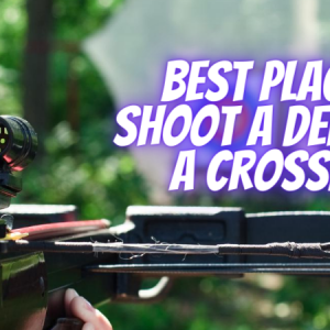 Best Place To Shoot A Deer With A Crossbow